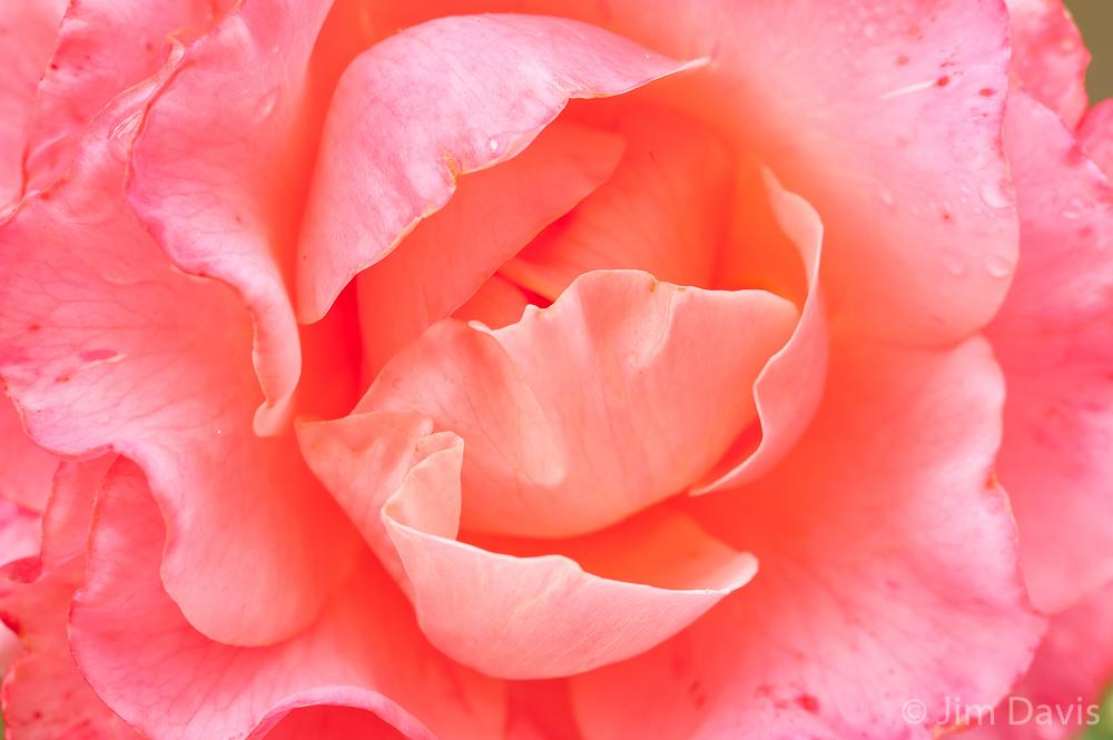 Flora-6173.jpg