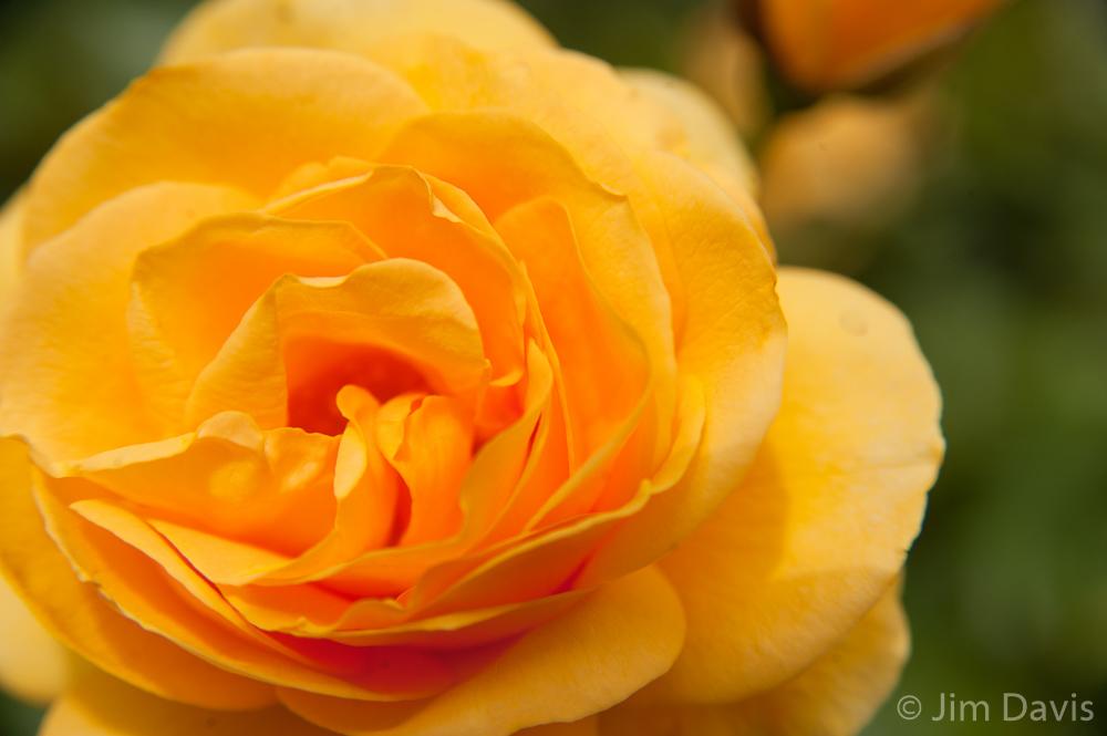 Flora-7604.jpg