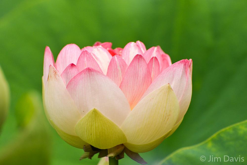 Flora-8075.jpg