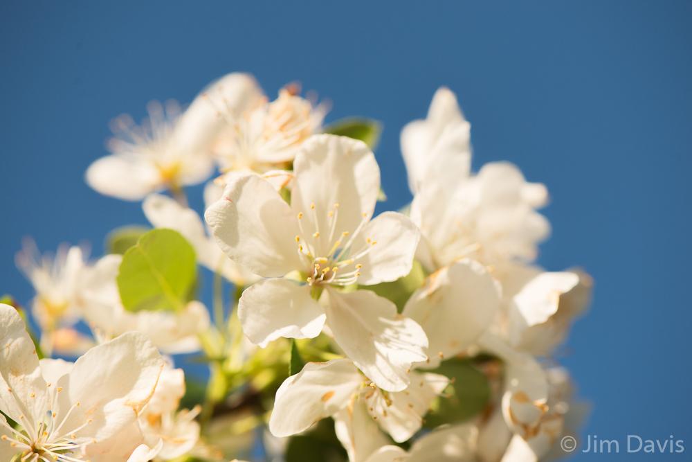 Flora-9611.jpg