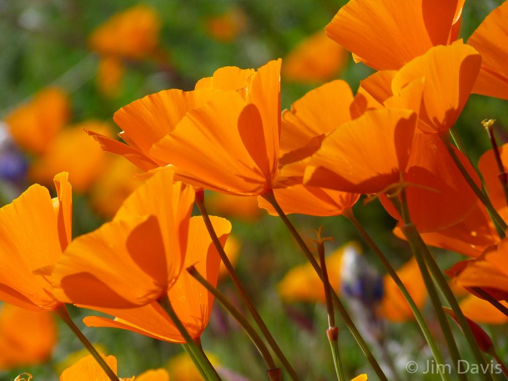 Flora-1040898.jpg