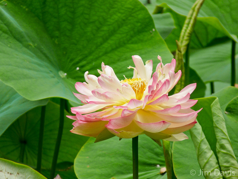 Flora-1060190.jpg