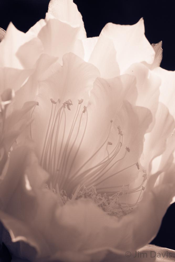Flora-1705.jpg