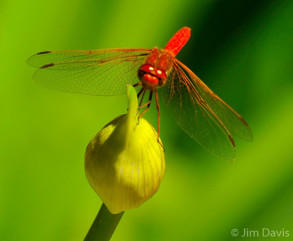 Fauna-8959.jpg