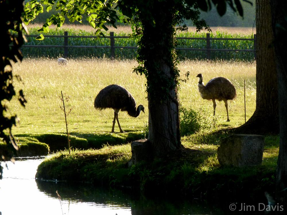 Fauna-1020440.jpg