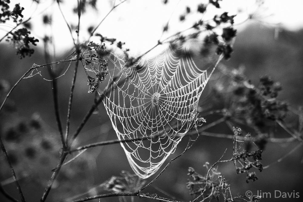 Spider Webs-2.jpg