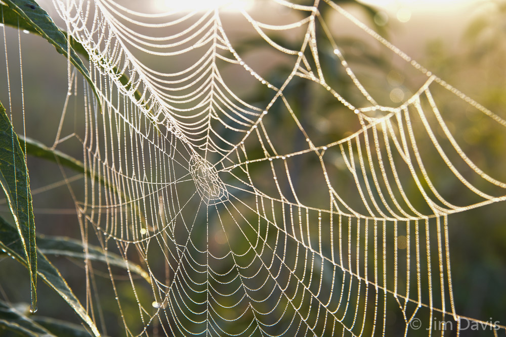 Spider Webs-0603.jpg