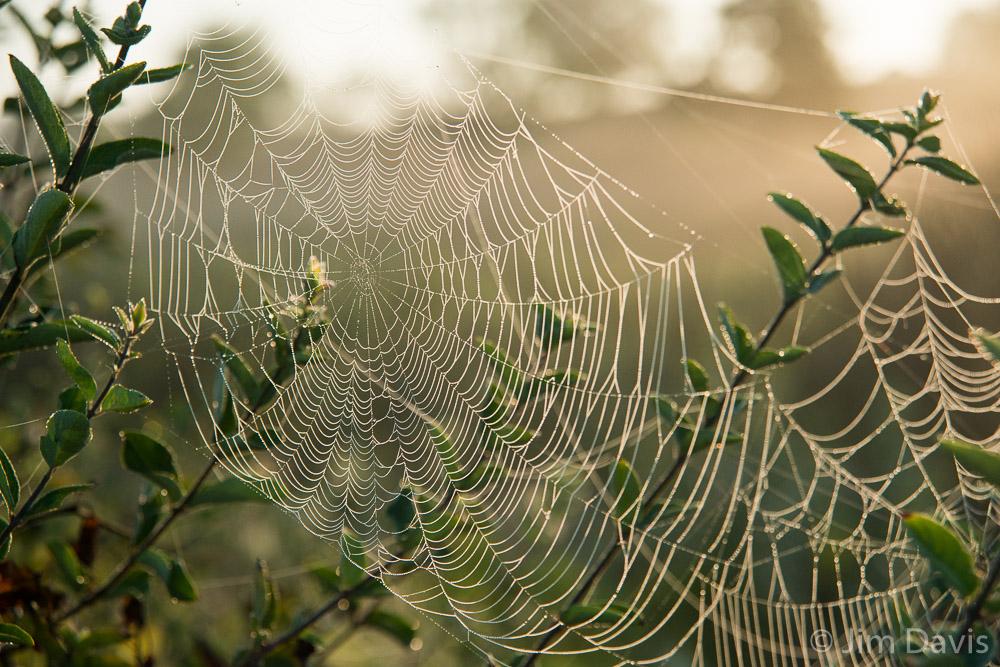 Spider Webs-0662.jpg