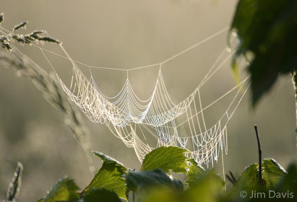 Spider Webs-1180.jpg