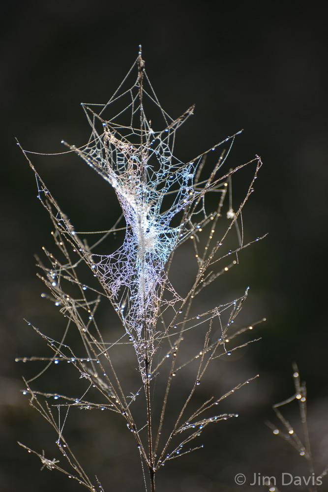 Spider Webs-1225.jpg