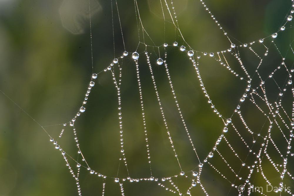 Spider Webs-4906.jpg