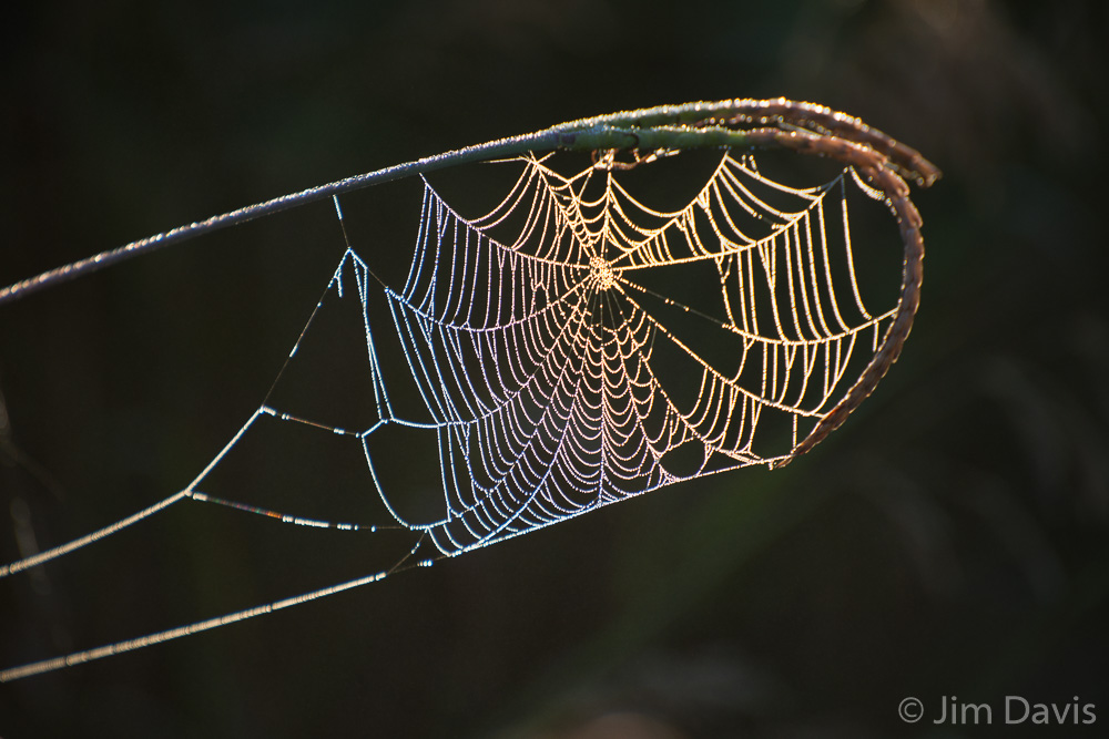 Spider Webs-5718.jpg
