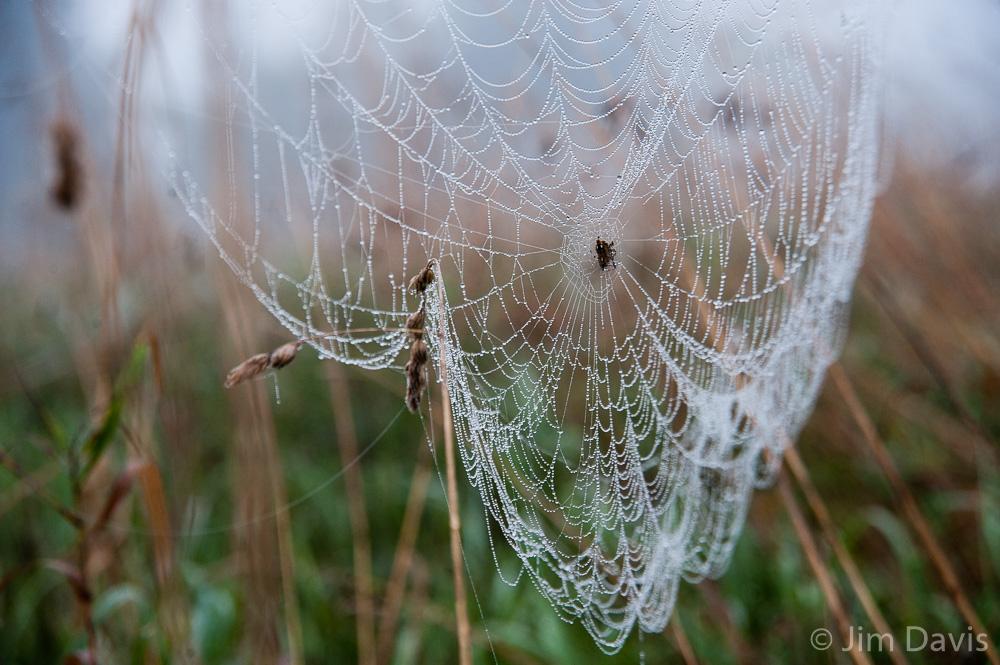 Spider Webs-8732.jpg
