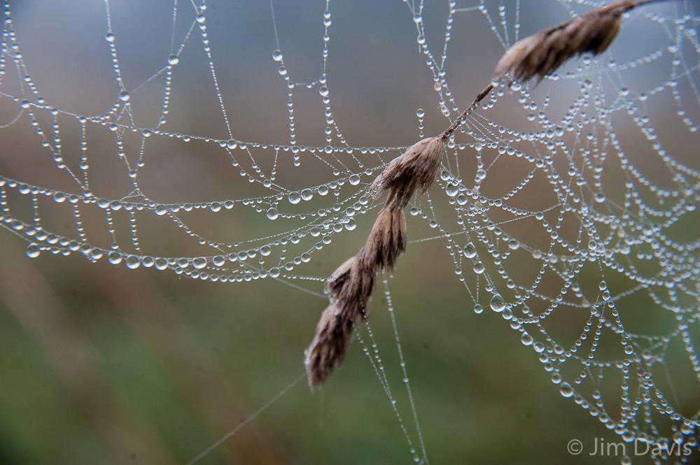 Spider Webs-8738.jpg