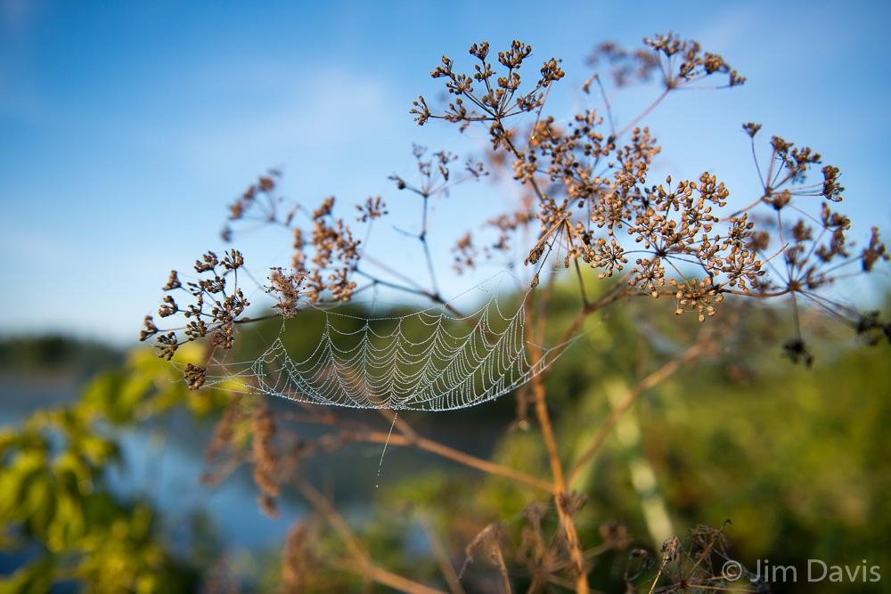 Spider Webs-9329.jpg