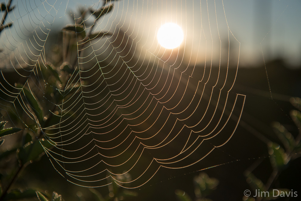 Spider Webs-9417.jpg