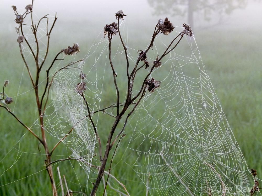 Spider Webs-1010827.jpg