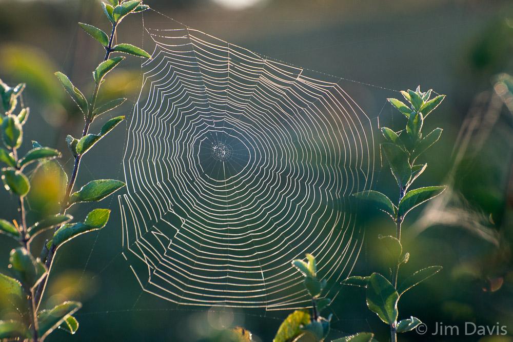 Spider Webs-9480.jpg