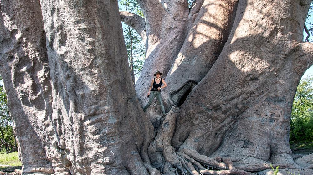 Simo Baobab1.jpg