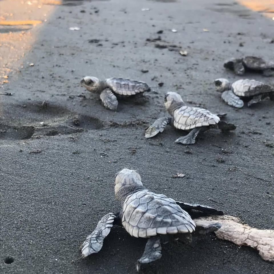 Sea turtles! *swoon*