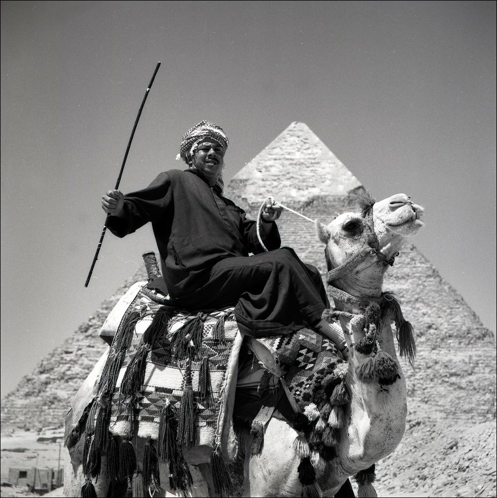 Camel driver.jpg