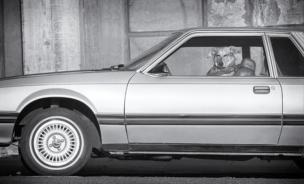 Dog driver.jpg