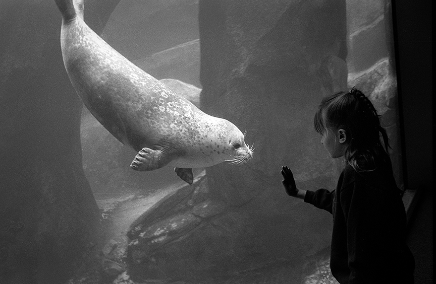 Girl_with_seal.jpg