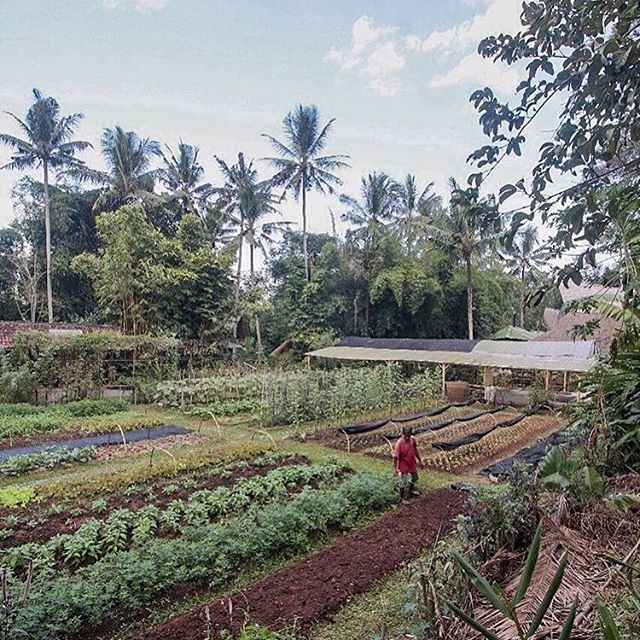 Very excited to be announcing a cheesemaking class at the incredible @kulkulfarm in Bali, Indonesia. I'll be teaching a 5-day course there from April 3-7. Come make cheese in the tropics! More info on link in bio.