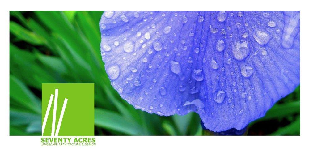 07+Iris+Petal+Rain.jpg