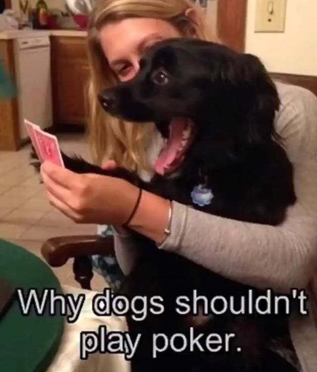 But I'd bet on playing with this dog any day.  #dogsaretheworst poker players