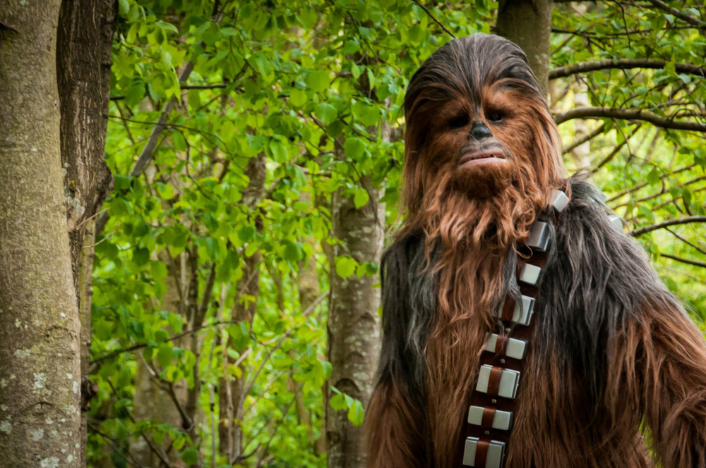 Chewbacca - fabricated by Jon Berry, Photographed by Legoland Windsor Official Photographer