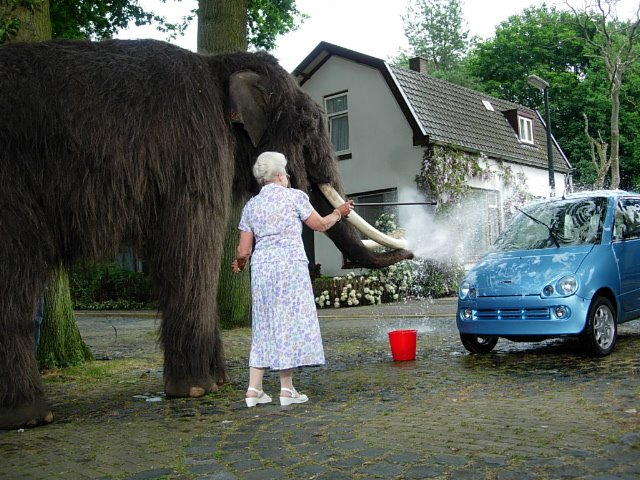 Real Elephant covered with NFT Wooly Mammoth hair for a McDonald's Commercial in the Netherlands by Rob's Prop Shop