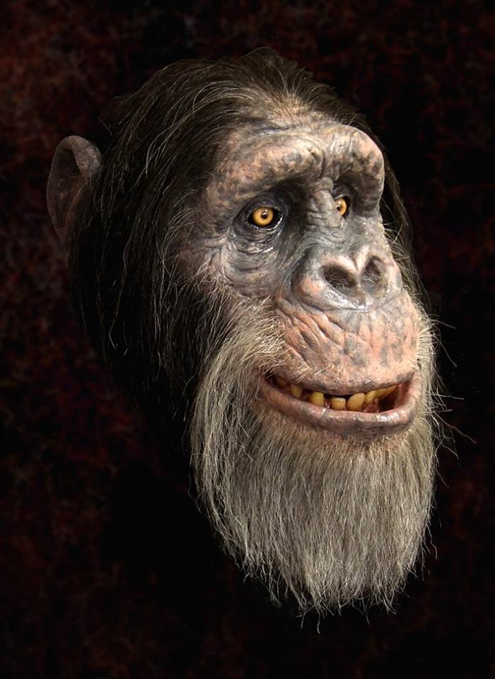 Chimp by Barry Atkinson of Creatures and Other Oddities
