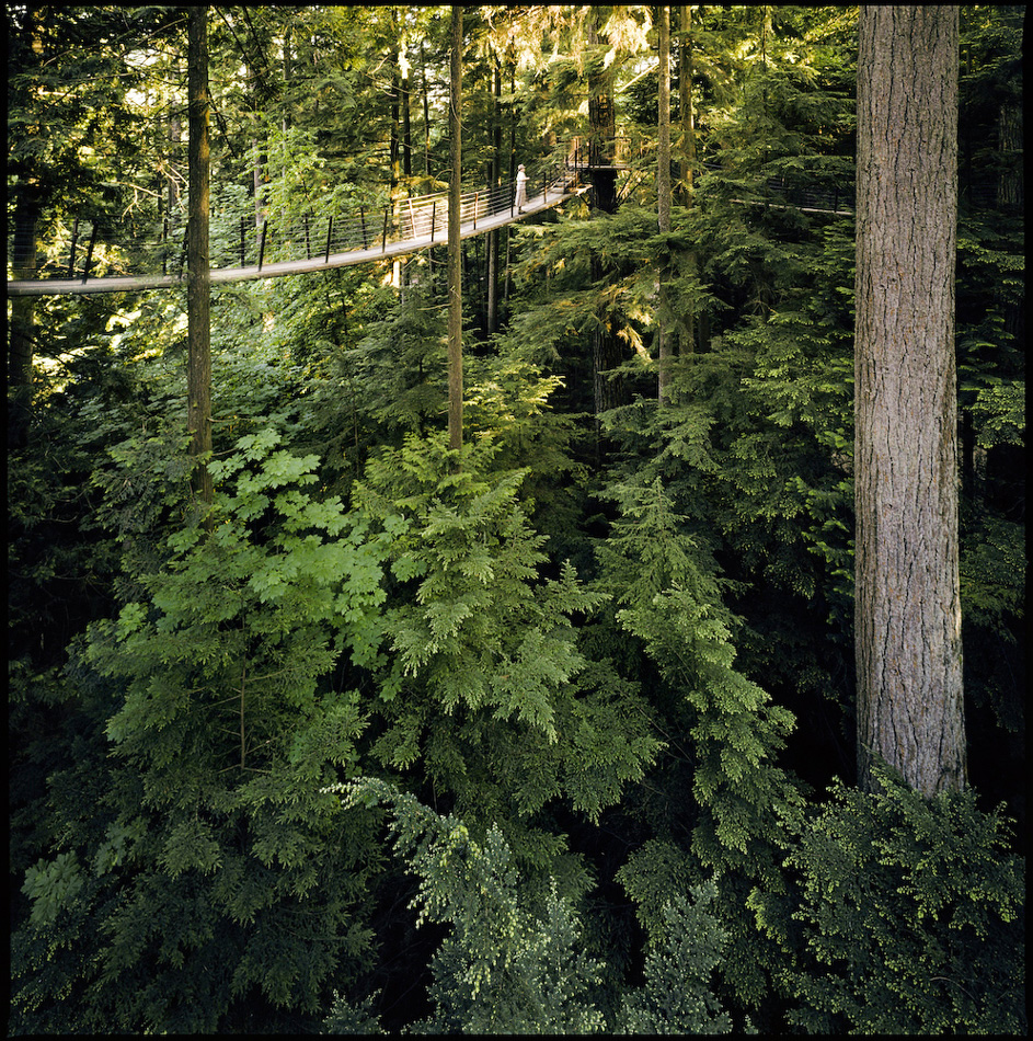 Treetops Walkway, Capilano Suspension Bridge, Vancouver, BC, Canada