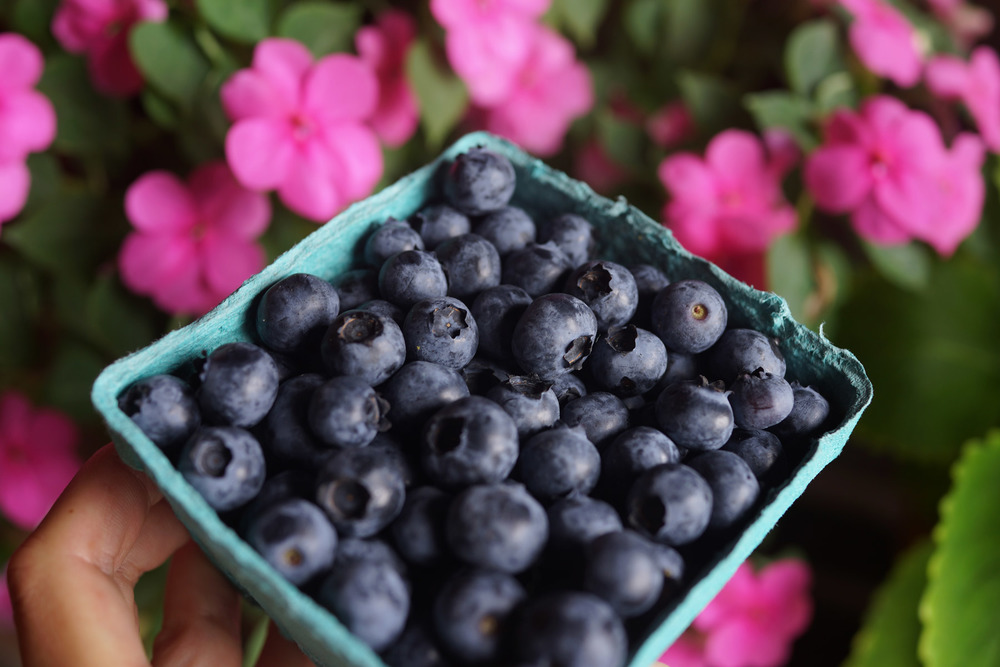 blueberries-DSC01319.jpg