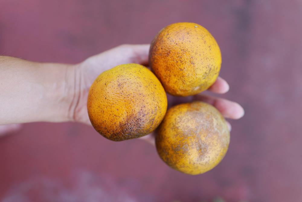 oranges-creamsicle-DSC01848.jpg