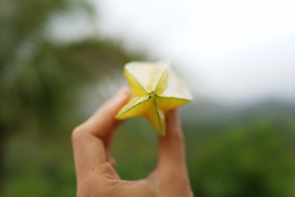 starfruit-DSC05693.jpg