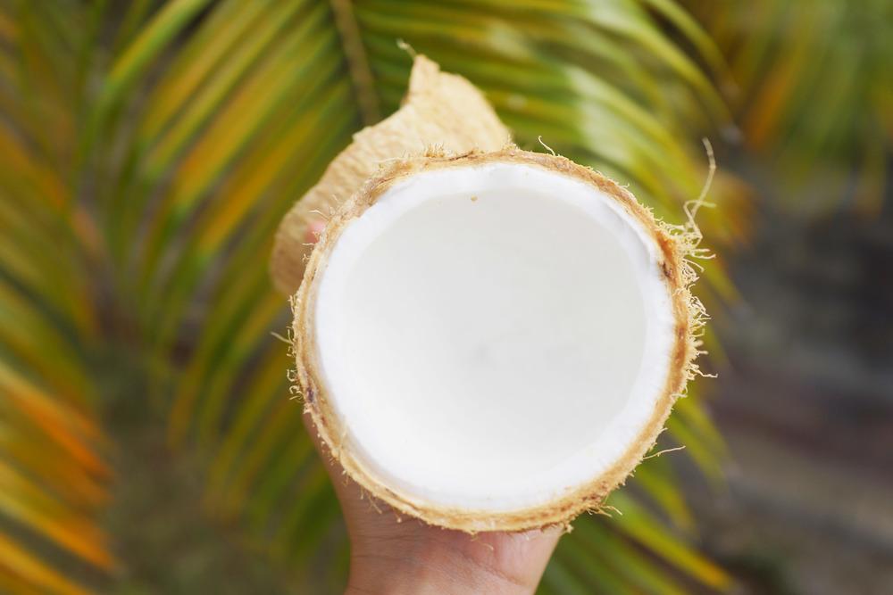 coconut-DSC01862.jpg