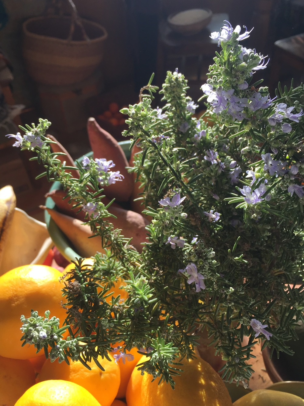 Fresh desert rosemary, photo by Angela de la Agua.