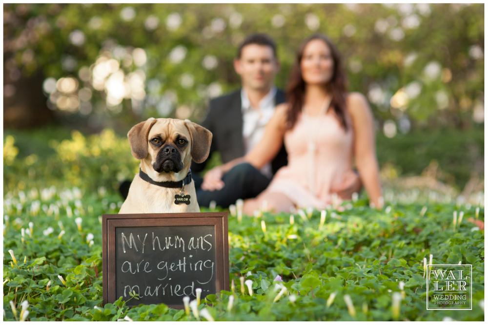 santa barbara wedding, waller weddings, wedding photography, engagement, santa barbara engagement, southern california wedding (17)
