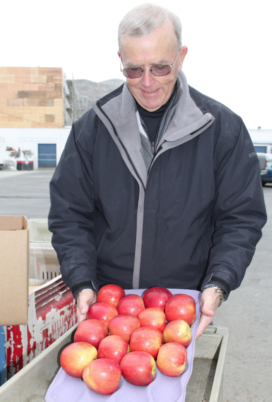 Tom Auvil, research horticulturist with the Washington Tree Fruit Research Commission, is impressed with the condition of WA 38 apples after four months in regular storage.