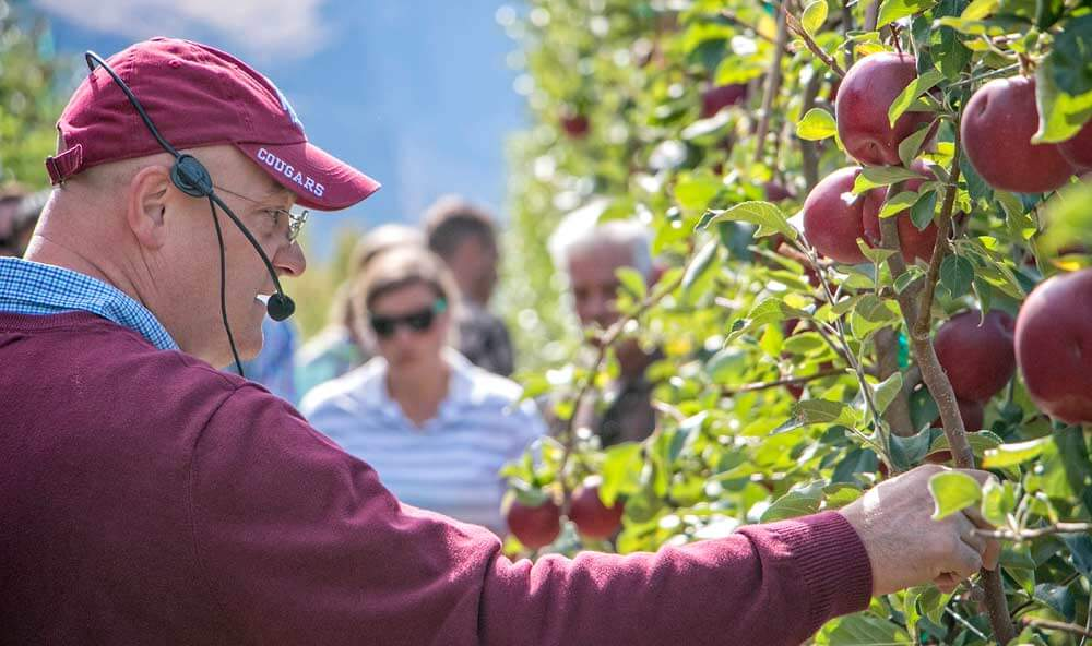Stefano Musacchi, Washington State University horticulturist and endowed chair in tree fruit physiology and management, discusses fruit spacing of the Cosmic Crisp in September at the Sunrise research orchard near Wenatchee.. Photo by Ross Courtney,  Good Fruit Grower .