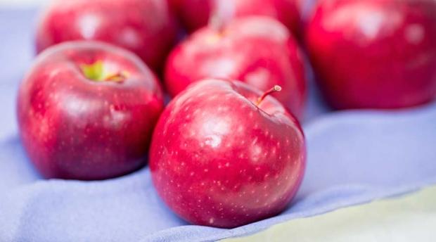 WA 38 apples. (TJ Mullinax/Good Fruit Grower)