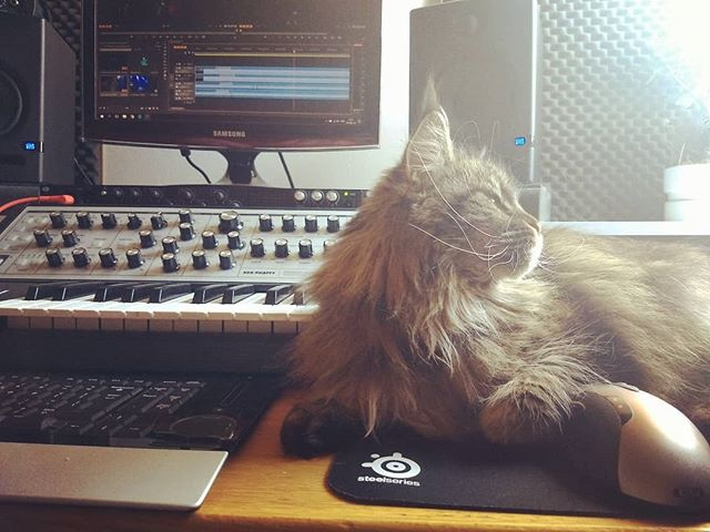 When your cat is like wtf it's hot man, no working for you today 😽  #catsofinstagram #mainecoon #editing #liveshow #recording #homestudio #bandlife #premierepro #moog #subphatty #catsonsynths