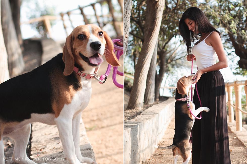 sesion-fotografica-perro-beagle-san-borja