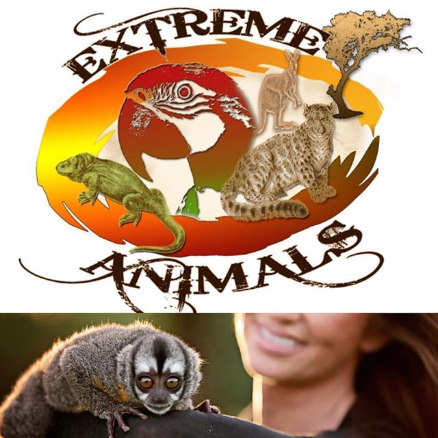 We're excited to have @extremeanimals01 out to #westfestok tomorrow! They'll be there from 1-4 in our kids area north of @42ndstreetcandy!