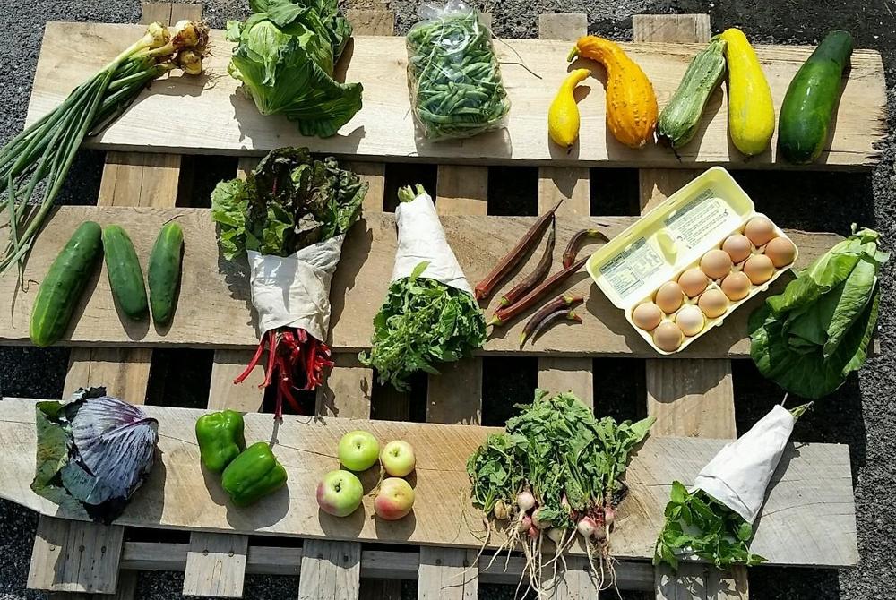 veggies07242015