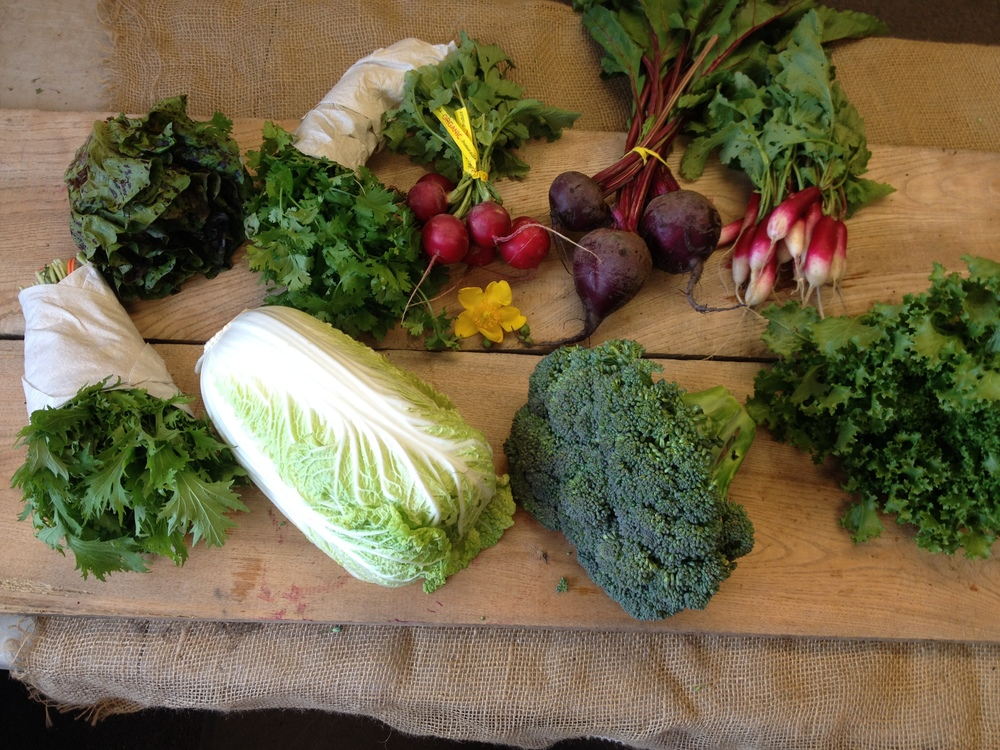 Spice of Life small- Lettuce, herbs, red radishes, beets, French breakfast radishes, mizuna, napa cabbage, broccoli, endive.