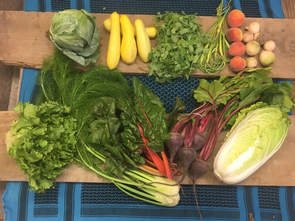 Spice of Life Large~ Green cabbage, Grab bag (yellow squash shown), baby pea shoots, garlic scapes, peaches, watermelon radishes, escarole, fennel, swiss chard, beets, napa cabbage.