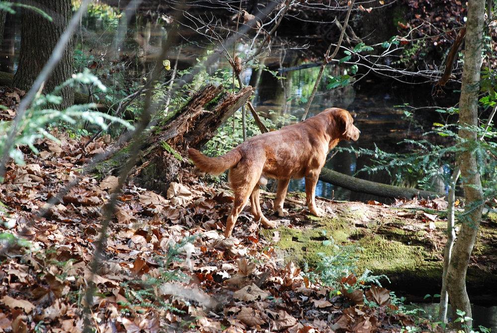 resident pup, Freddie Krueger